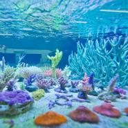 korallen.jpg