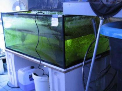 Glas Becken 120 x 120 x 50 cm