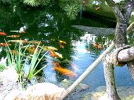 KoiAqua-Filtersystem im Teich